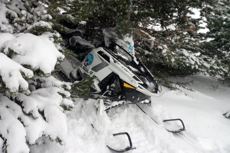 motos-de-nieve-accion-pirineos-moto-entre-pinos